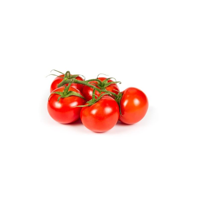 Tomaquet branca