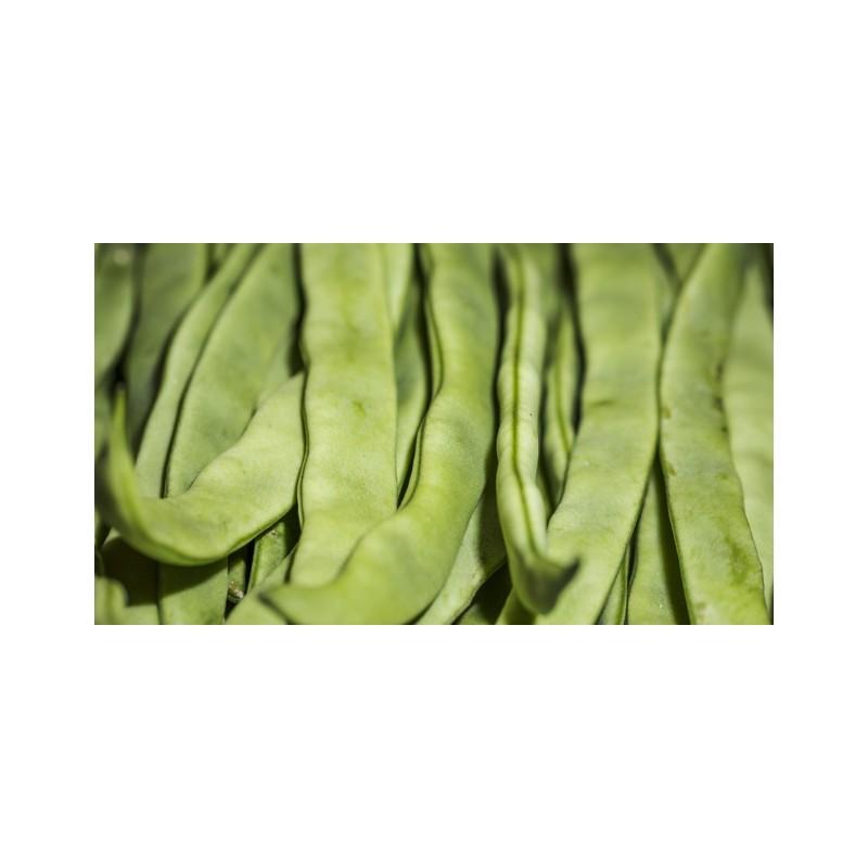 Mongetes verda perona
